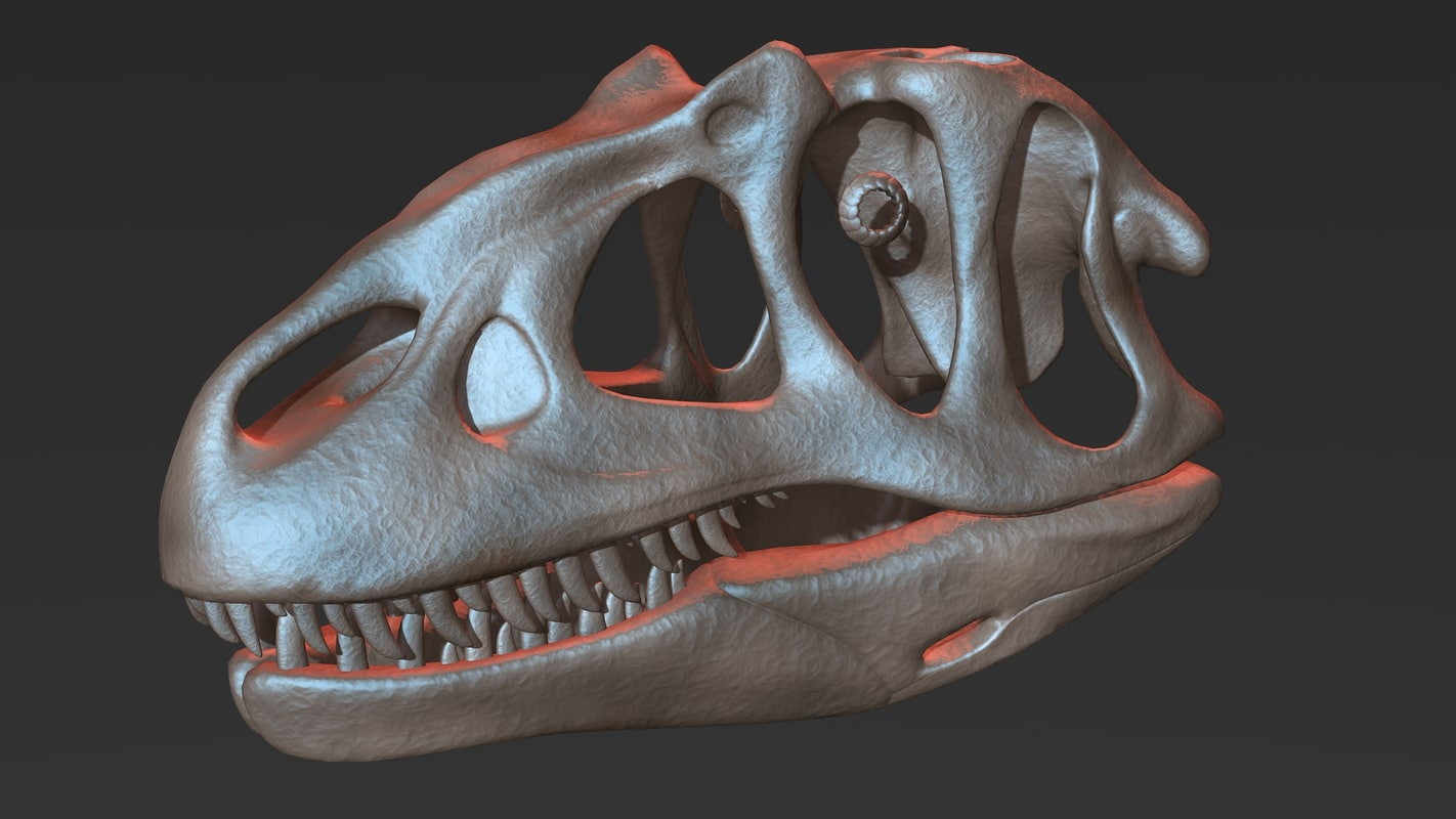 allosaurus skull 3D model