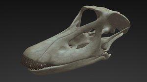 diplodocus skull 3D model