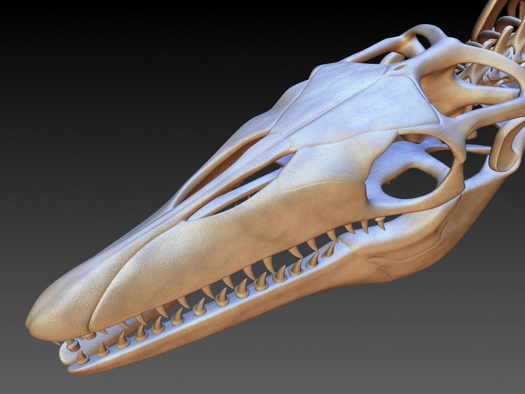 mosasaurus skull 3D model