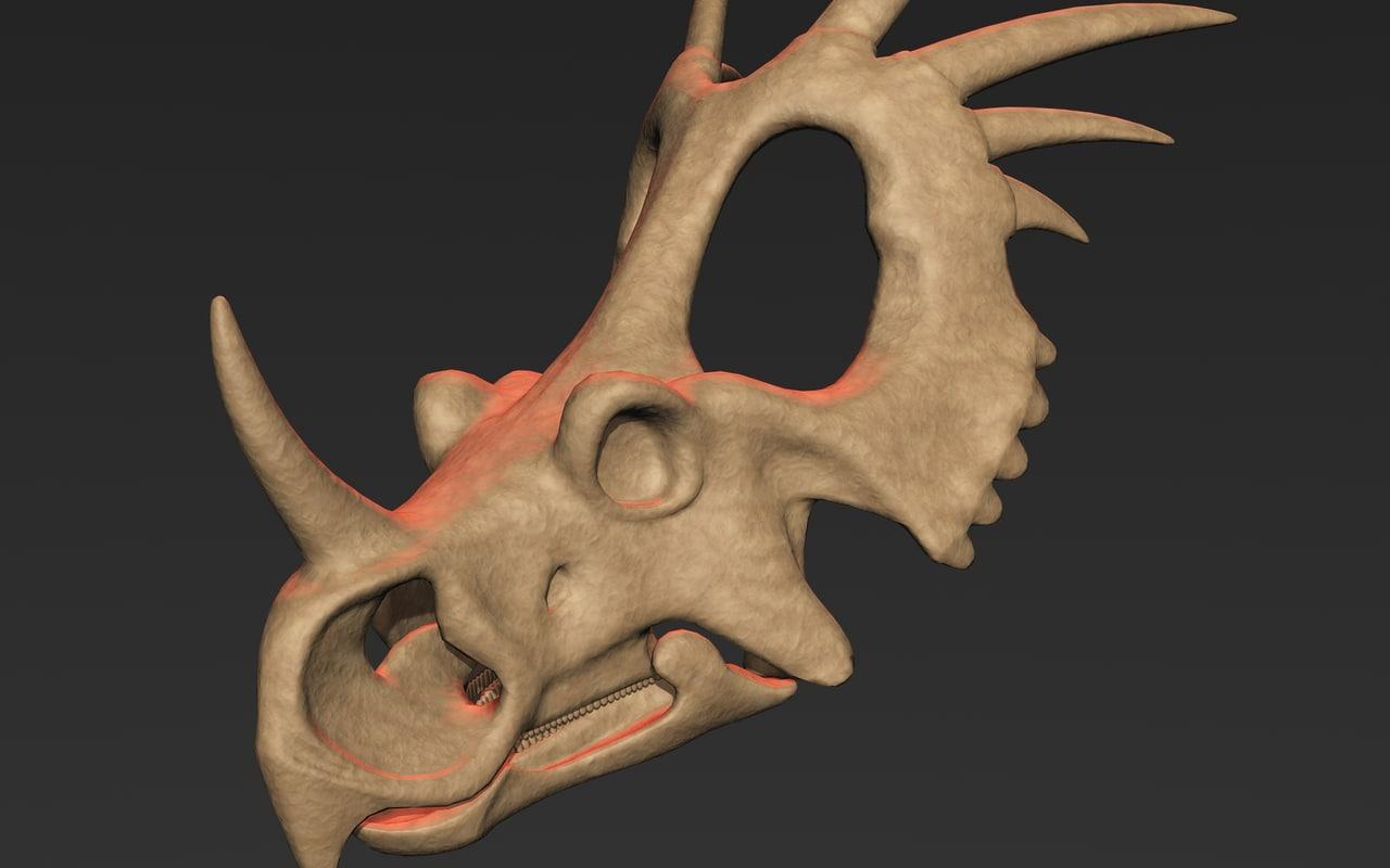 styracosaurus skull model