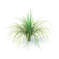 3D tall grass