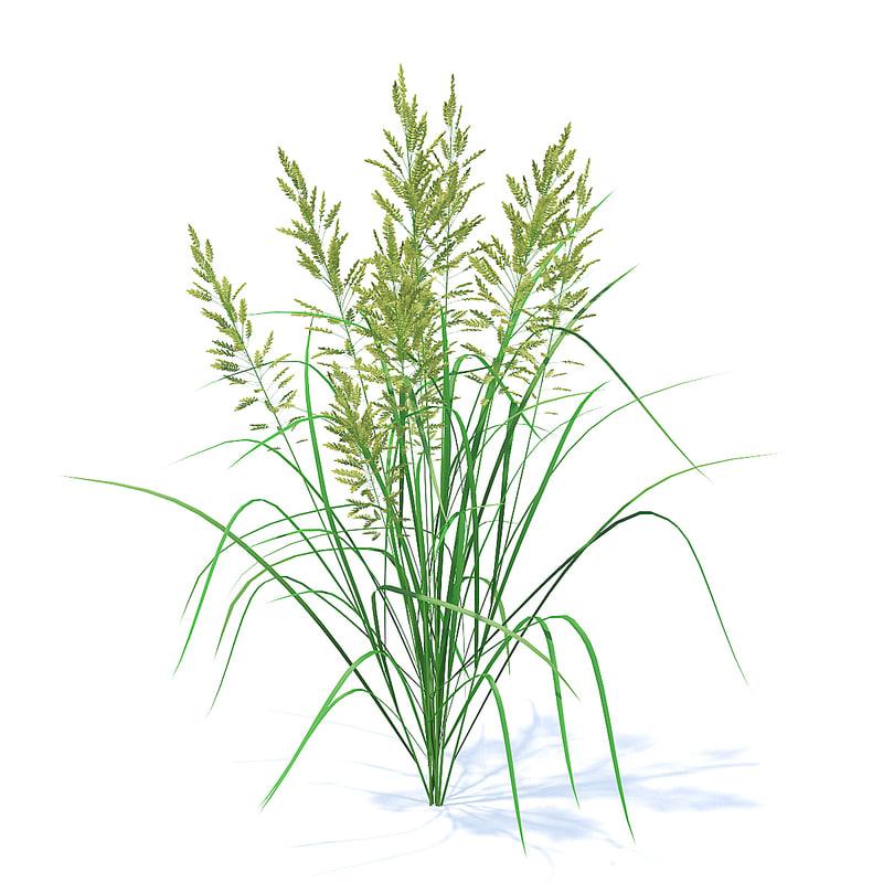 grass flowering 3D model