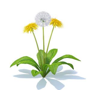 sow-thistle flowers sonchus 3D model