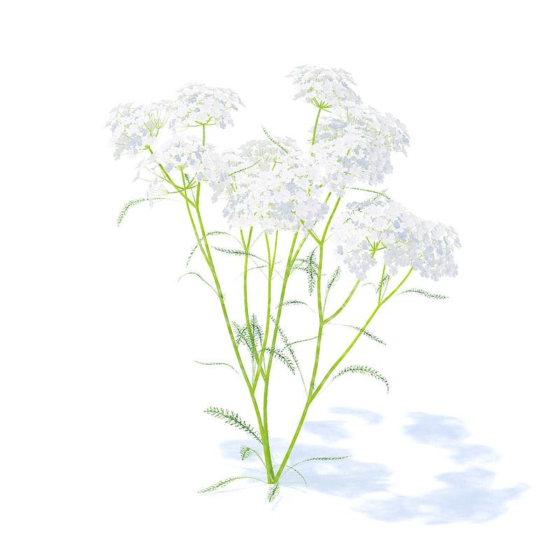 yarrow plant achillea 3D model