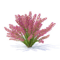 3D model heather plant calluna