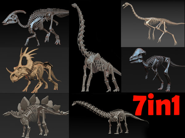 skeletons herbivorous dinosaurs 3D model