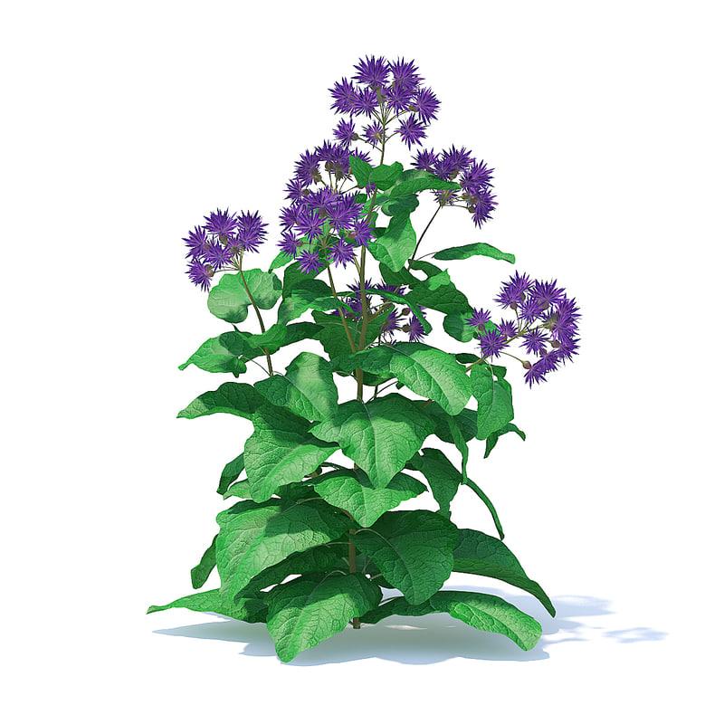 3D thistle plant silybum model