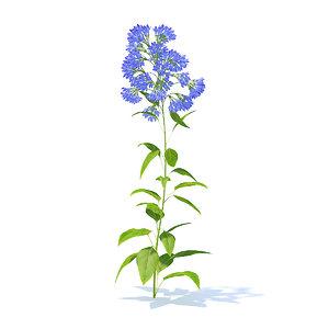 3D model bellflower campanula cochleariifolia