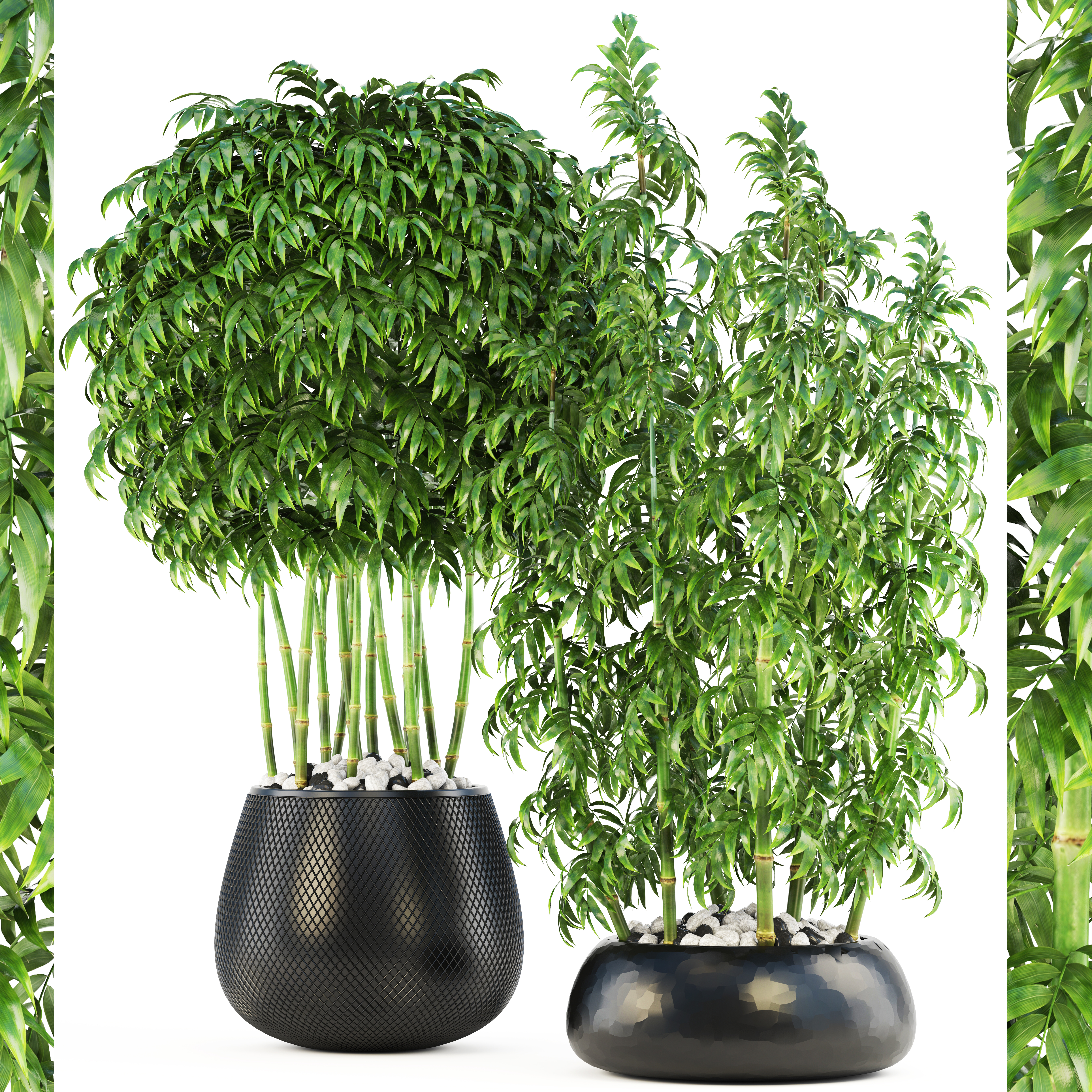 Bamboo Trees 3d Model Turbosquid 1229120