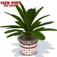 aloe vera pot plant 3D model