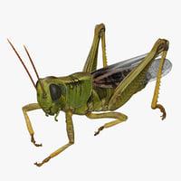 Grasshopper Eating Pose with Fur 3D Model