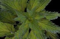 3D nature plants model