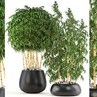3D golden bamboo trees model