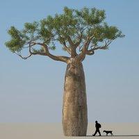 3D african baobab tree