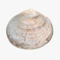 3D model clam pbr