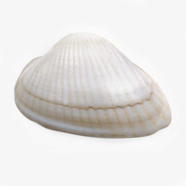 clam pbr 3D