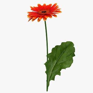 3D realistic gerbera flower