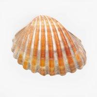 3D clam pbr model