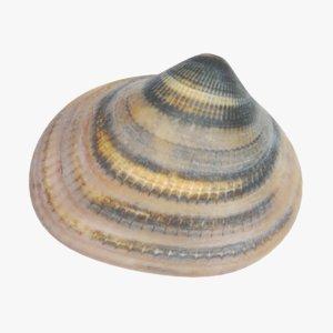 clam pbr 3D model