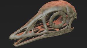 archaeopteryx skull 3D