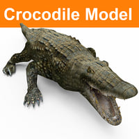 3D crocodile ready model