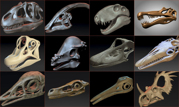 skulls dinosaurs 3D