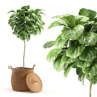 plant 011 - ficus model