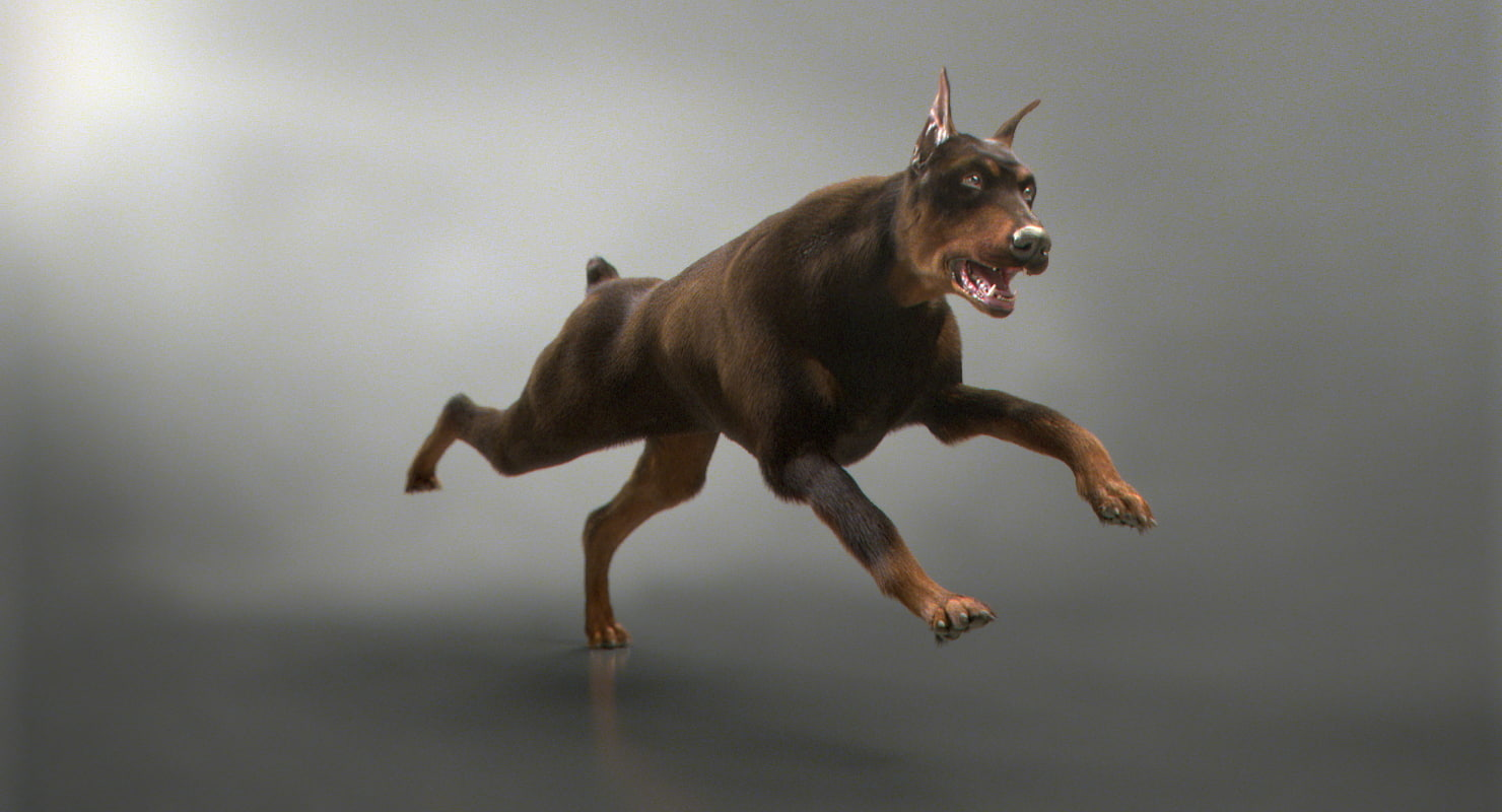 3D doberman fur rigged model