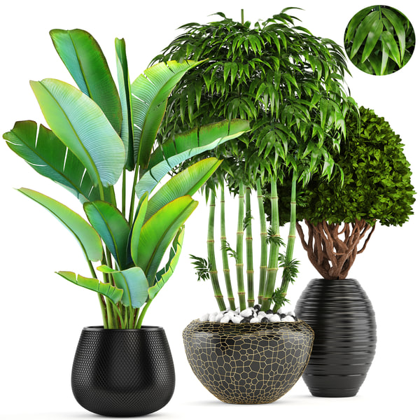 tropical plants bamboo trees 3D model