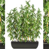 golden bamboo trees 3D model