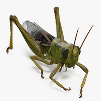 3D grasshopper eating pose model