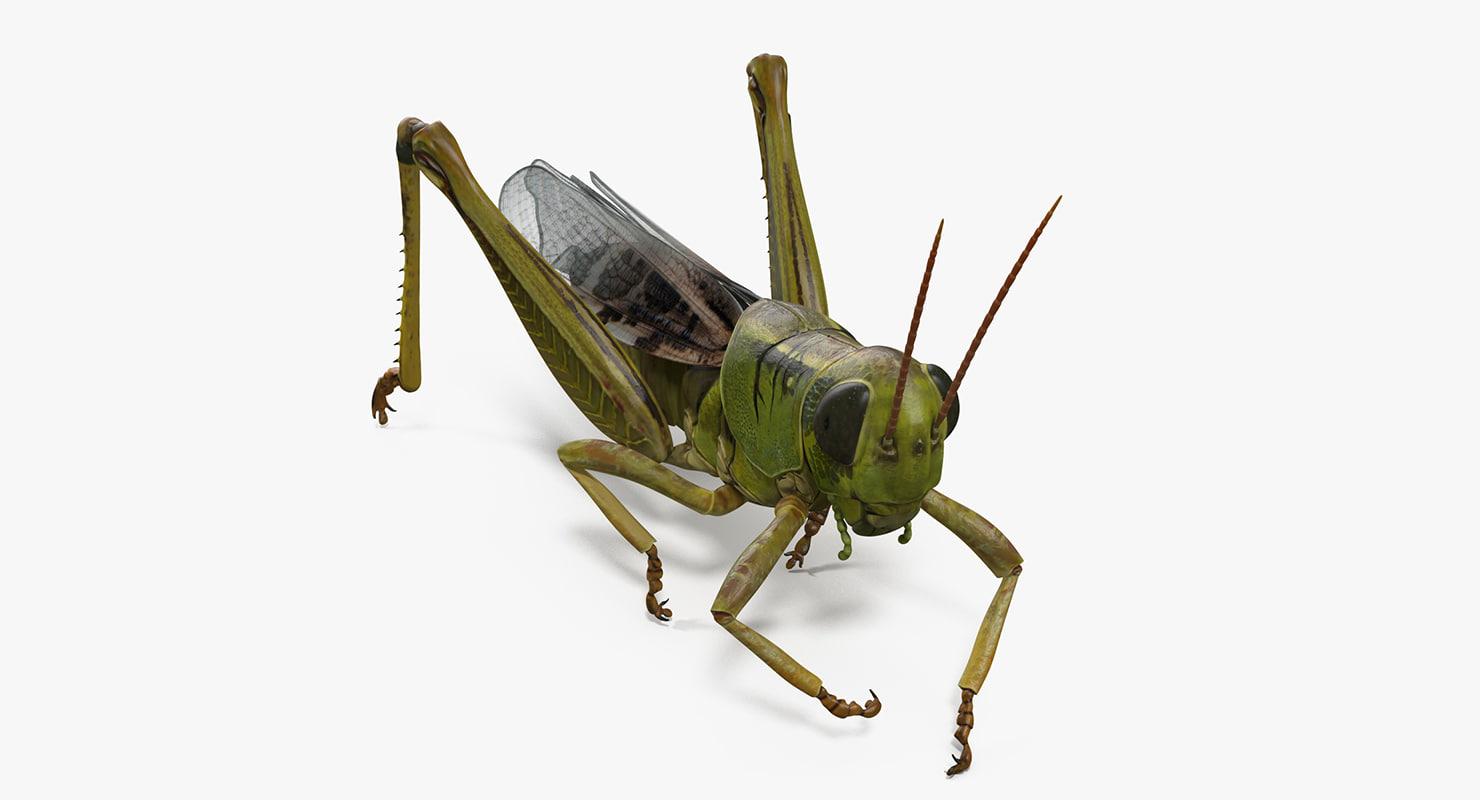 3D grasshopper eating ...