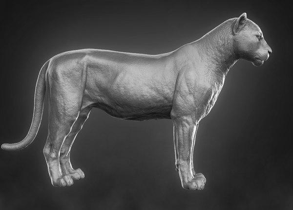 leopard panther cougar 3D model