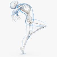 male body skeleton ballet 3D