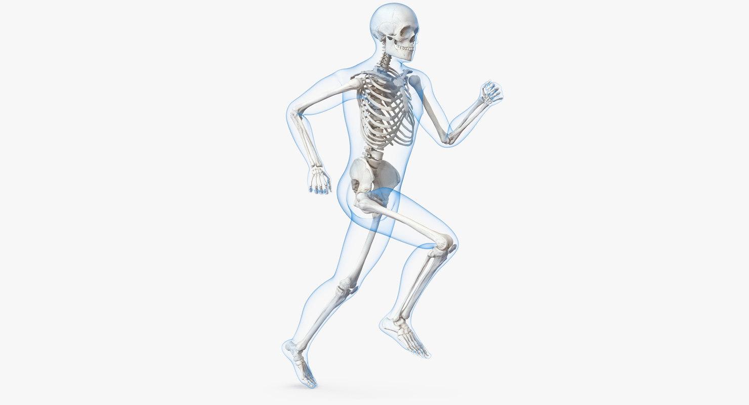 Male Body Skeleton Running 3d Model Turbosquid 1229826