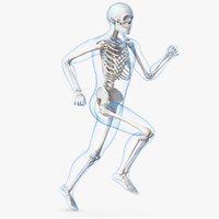 male body skeleton running 3D model