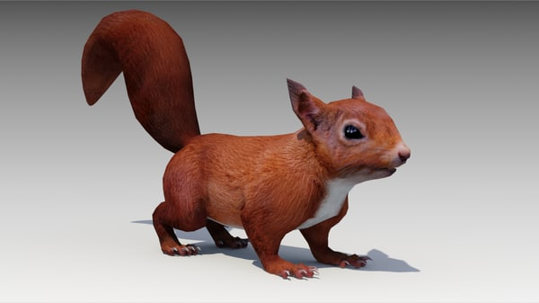 3D squirrel model
