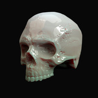 Human hipoly skull