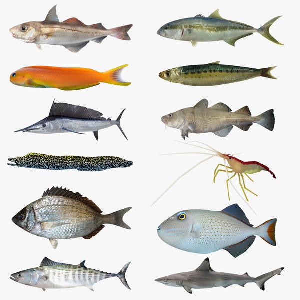 3D sea-life sea model