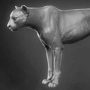 3D cheetah zbrush