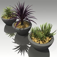 3D model succulent plants pots
