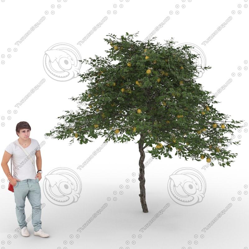 3D citrus lemon tree