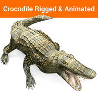 3D crocodile rigged animation