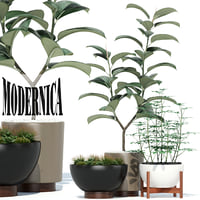Plants collection 73 Modernica pots