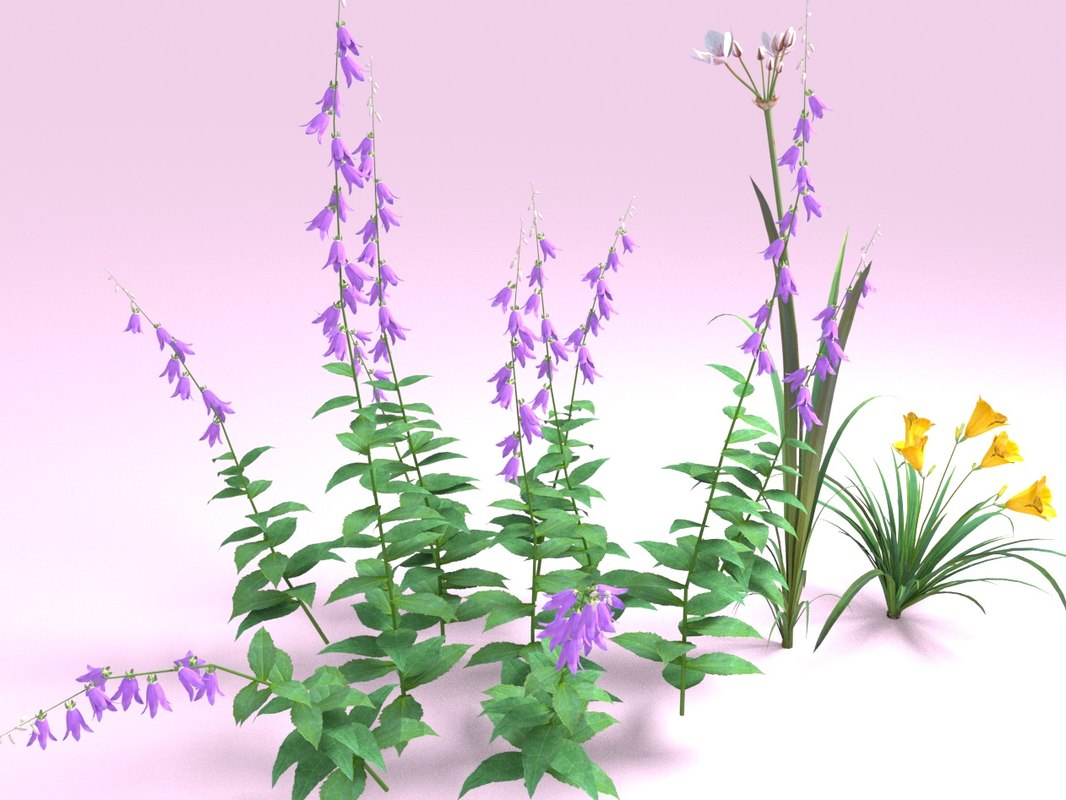 flowers - day lily 3D model