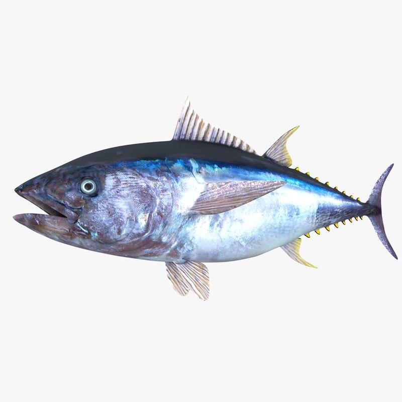 bluefin tuna 3D model