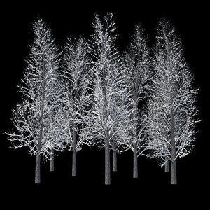 3D winter tree 019