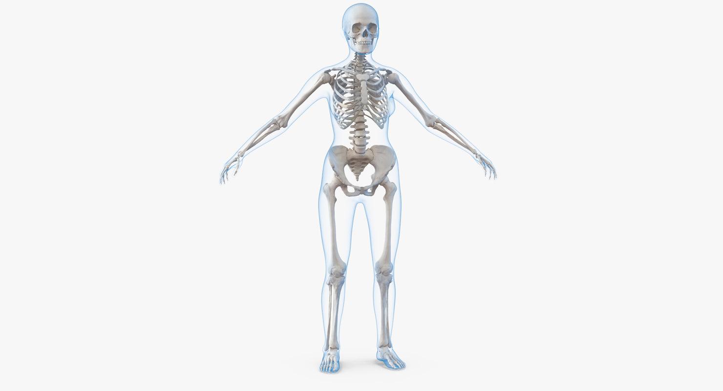 3D female body skeleton