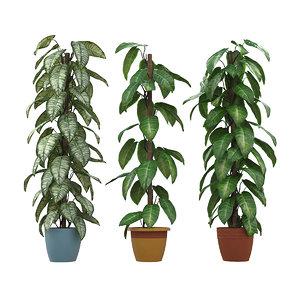 philodendron plants 3D model