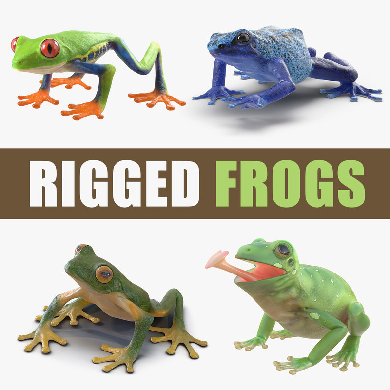 rigged frogs 2 3D